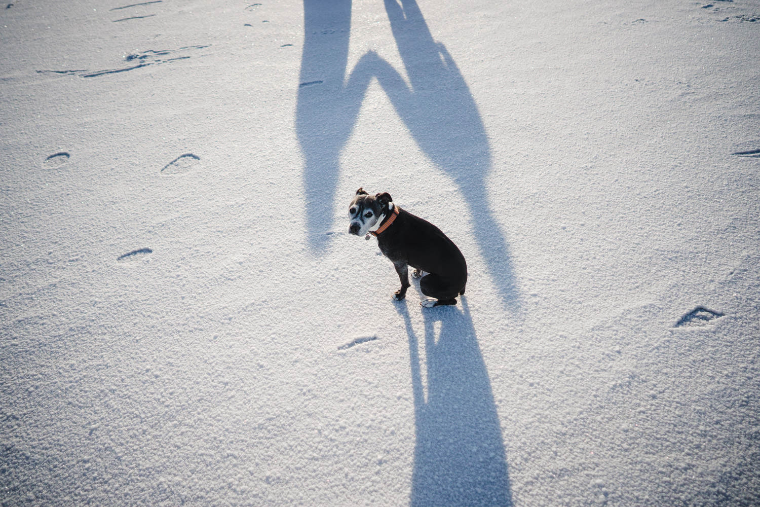 Bonneville Salt Flats wedding holding hands shadow with dog center photo