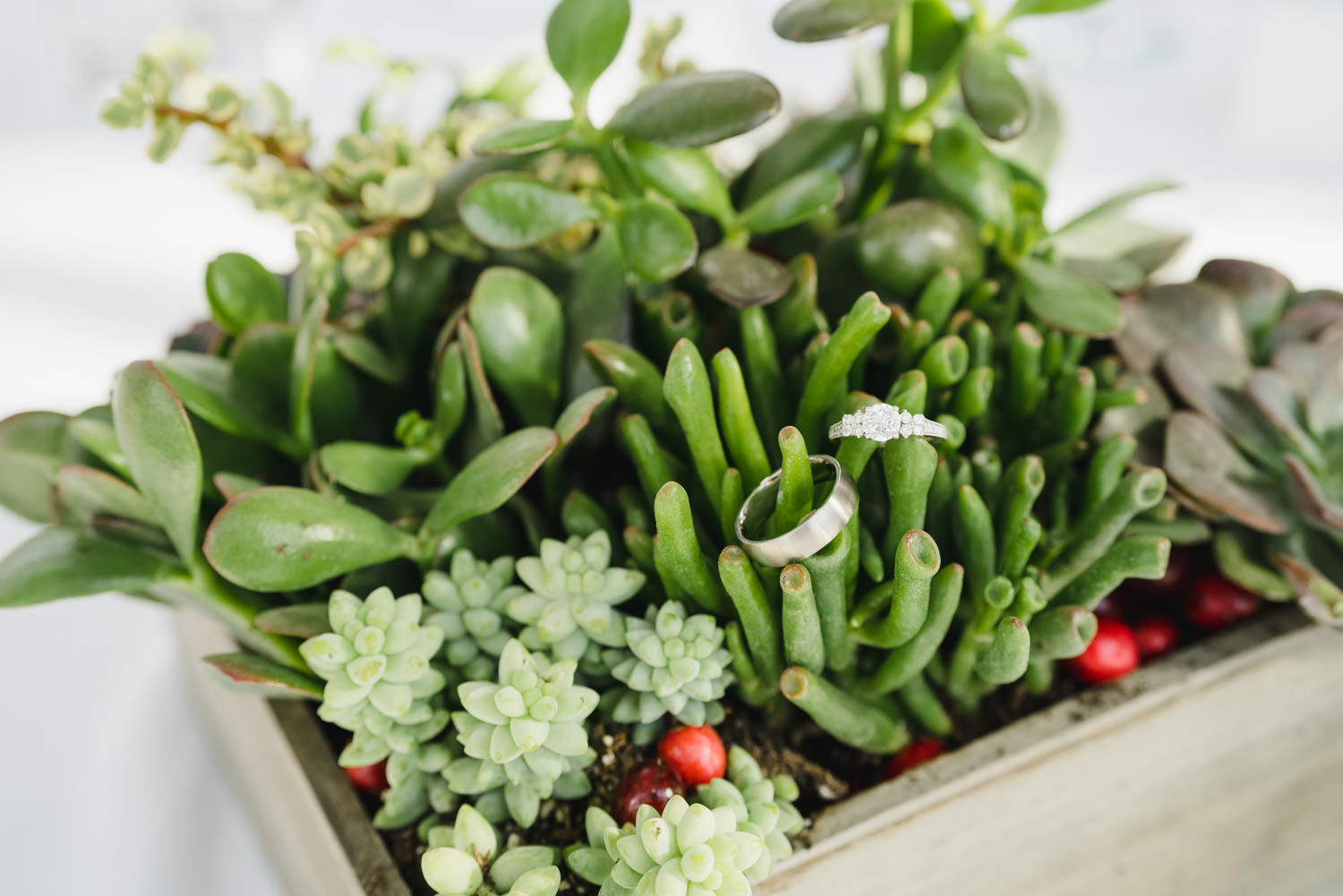Red Butte Garden wedding rings in succulents photo
