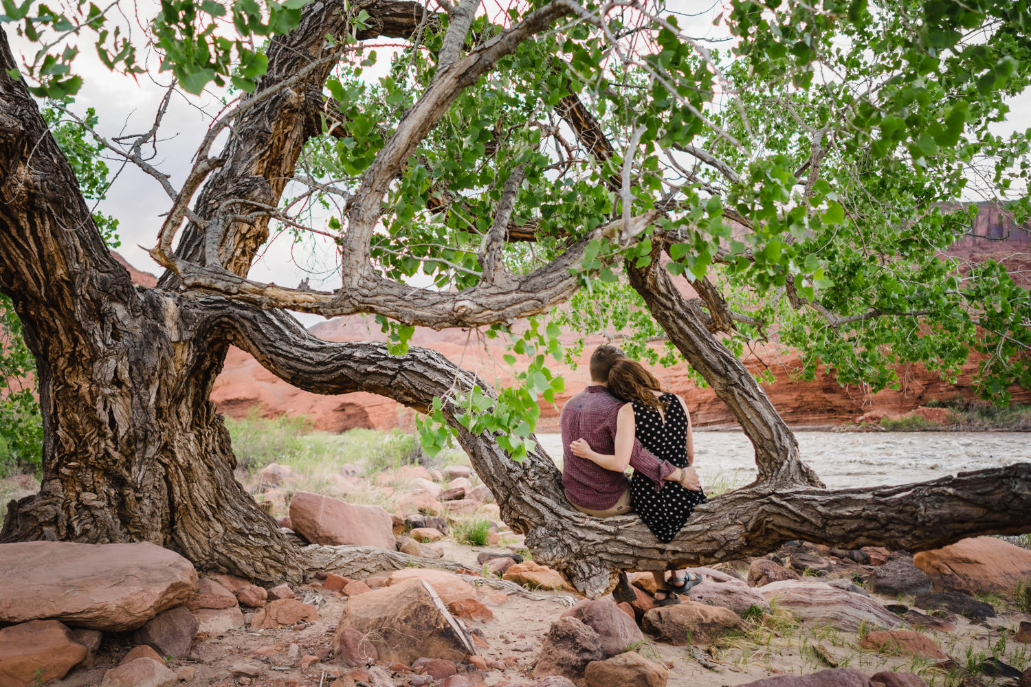 engagement session in Moab couple hugging on tree branch photo