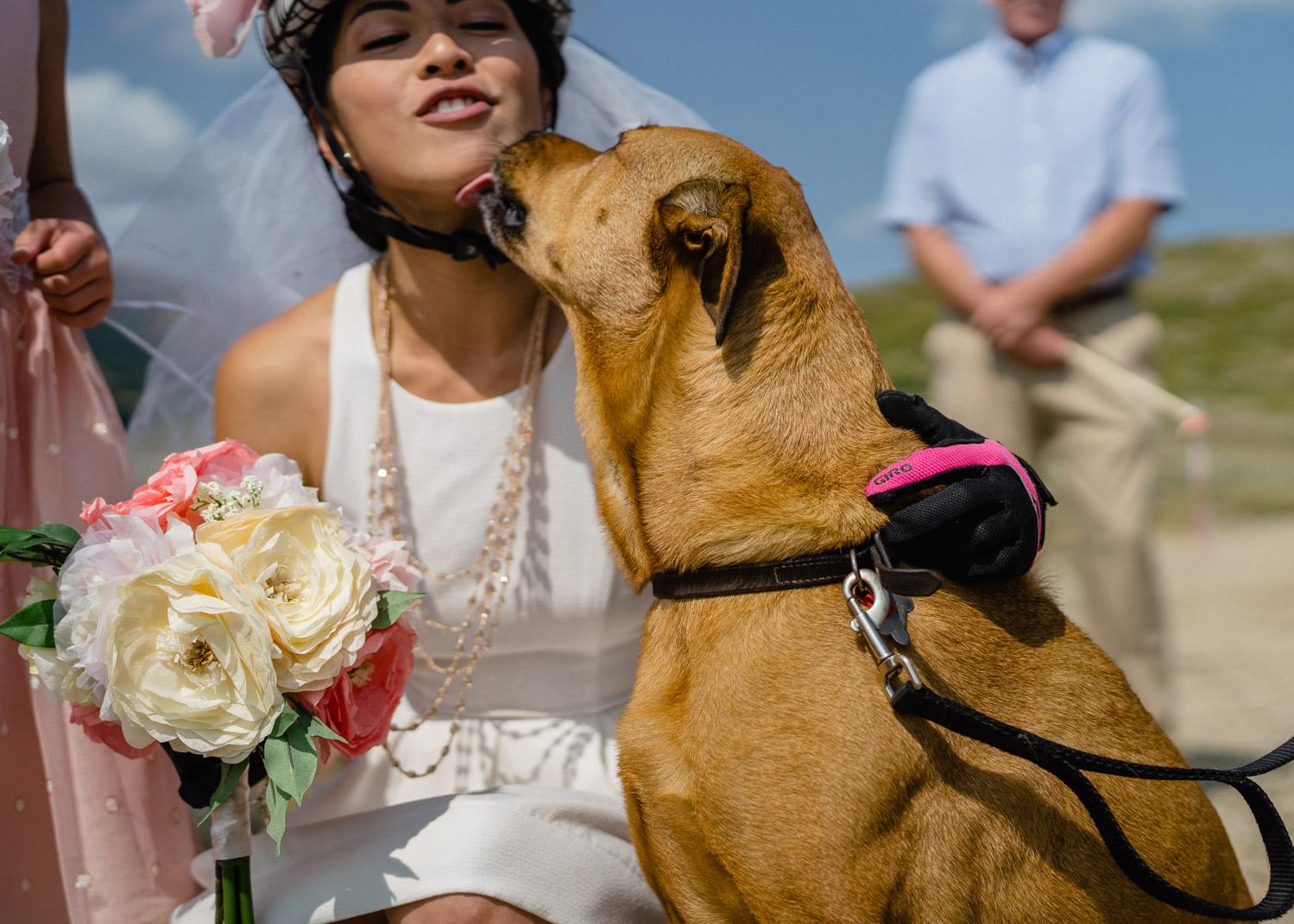 bride wearing bike helmet getting dog kisses
