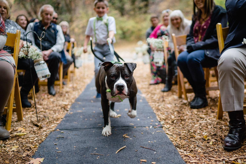 dog walking boy down wedding aisle millcreek canyon fall