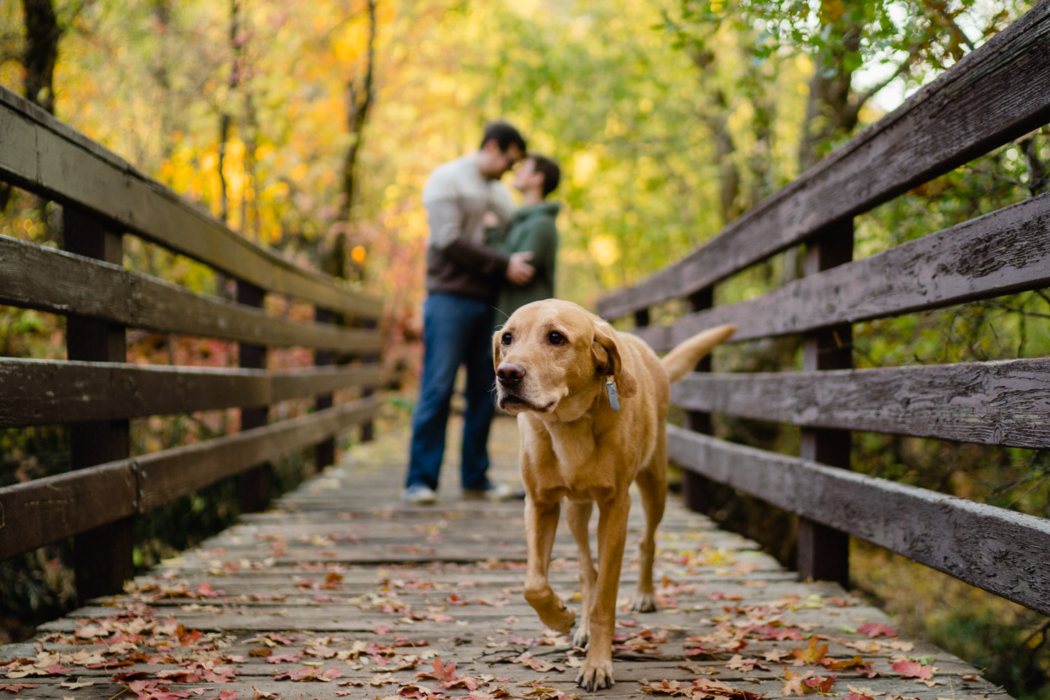Millcreek Engagement with a Dog