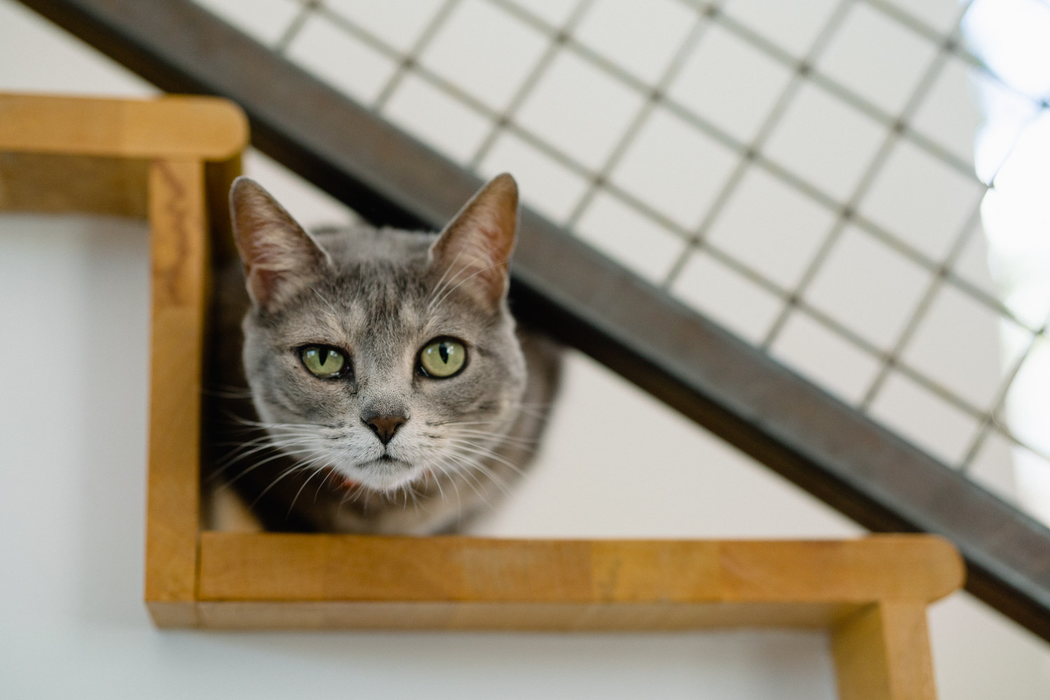 cat on stairs solitude mountain wedding